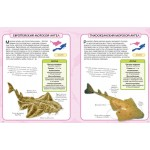 Акулы и скаты. Камилла де ла Бедуайер