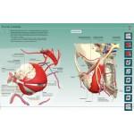 Анатомия человека 360°. Иллюстрированный атлас. Джейми Роубак