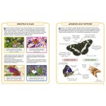 Бабочки. Энциклопедия. Камилла де ла Бедуайер