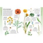 Всё о цветущих растениях, прекрасных и загадочных. Визуальная энциклопедия