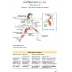 Анатомия йоги. Лесли Каминофф, Эйми Мэтьюз
