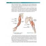Анатомия силовых упражнений с использованием в качестве отягощения собственного веса. Брет Контрерас